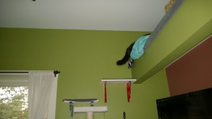 bonkers in living room cat alcove