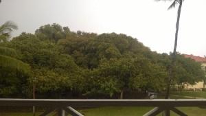 maui hawaii pioneer inn deck overlooking banyan tree in rain