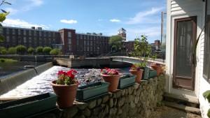 flower pots in yard overlooking the ipswich river, riverwalk, and ebsco