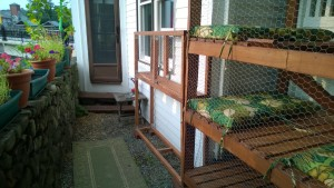 attaching the outdoor cat enclosure / catio connector to the catio and house