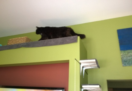 Cats in the Alcove – Part 9