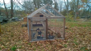abbie and briggs chicken coop with chickens and 1 rooster