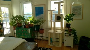 condo master bedroom reorg showing green bureau in new spot