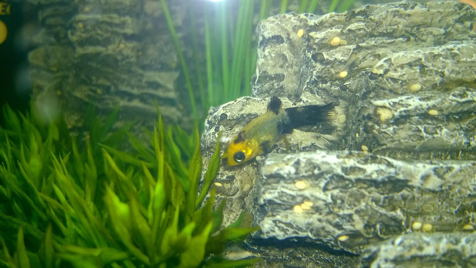 The Fish Baby