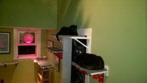 cats sleeping on the new upstairs hall cat platorms - birdie on top, darwin below