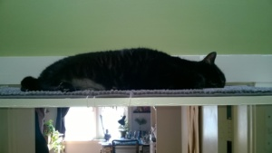 birdie in pure bliss mode on her new upstairs hall cat platform