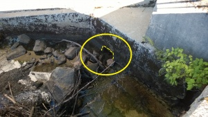 i removed the rocks blocking the entrance to the storm drainage system below our yard