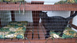 darwin checking out the updated catio with welded wire