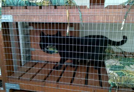 Backyard Catio – Part 24