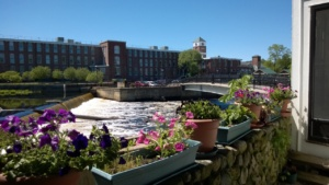i planted petunias in our back yard pots - view of the ipswich river & dam
