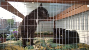 bonkers and darwin in the catio