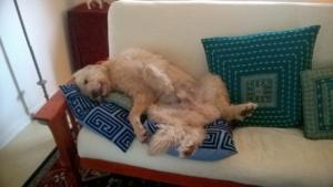 my friend barbara's dog buddy enjoying the ac