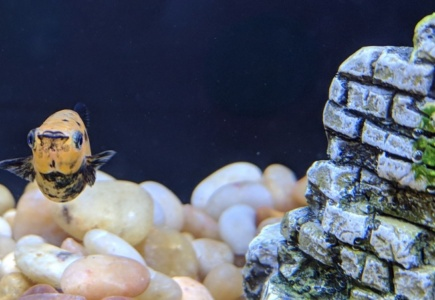 """An Update on the """"Fish Babies"""""""