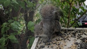 i love seeing the squirrels looking so happy as they visit their platform