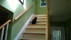 birdie sitting pretty on the stairs