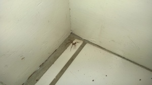 spider in front entrance hall