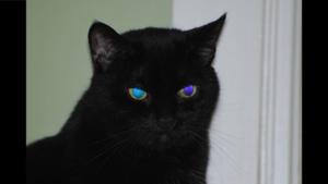 birdie with aqua and purple eyes, reflecting LED lights