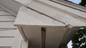 i spray painted the wire mesh hardware cloth i used to cover the bird nest