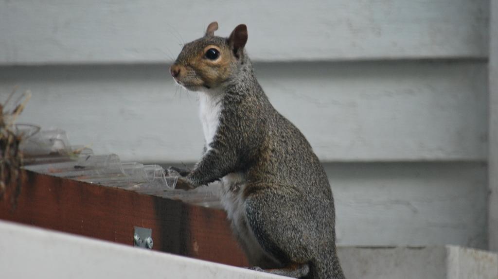 Squirrel Platform = FAIL