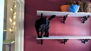 darwin helping me clean the laundry room shelves