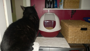 birdie checking out the raspberry litter box for laundry room