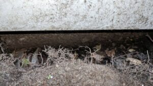 mice were getting under our front stoop and into the foundation