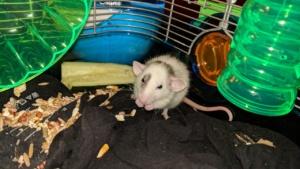 baby winston enjoying some snacks