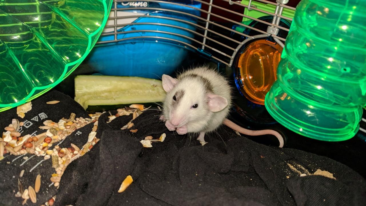 Meet The New Rats!