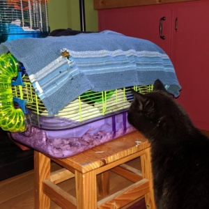 darwin watching cat tv - the mice were doing something loud