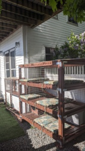 the catio looks much better with a fresh coat of stain