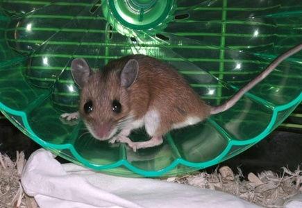 A Mouse Story – Part 1