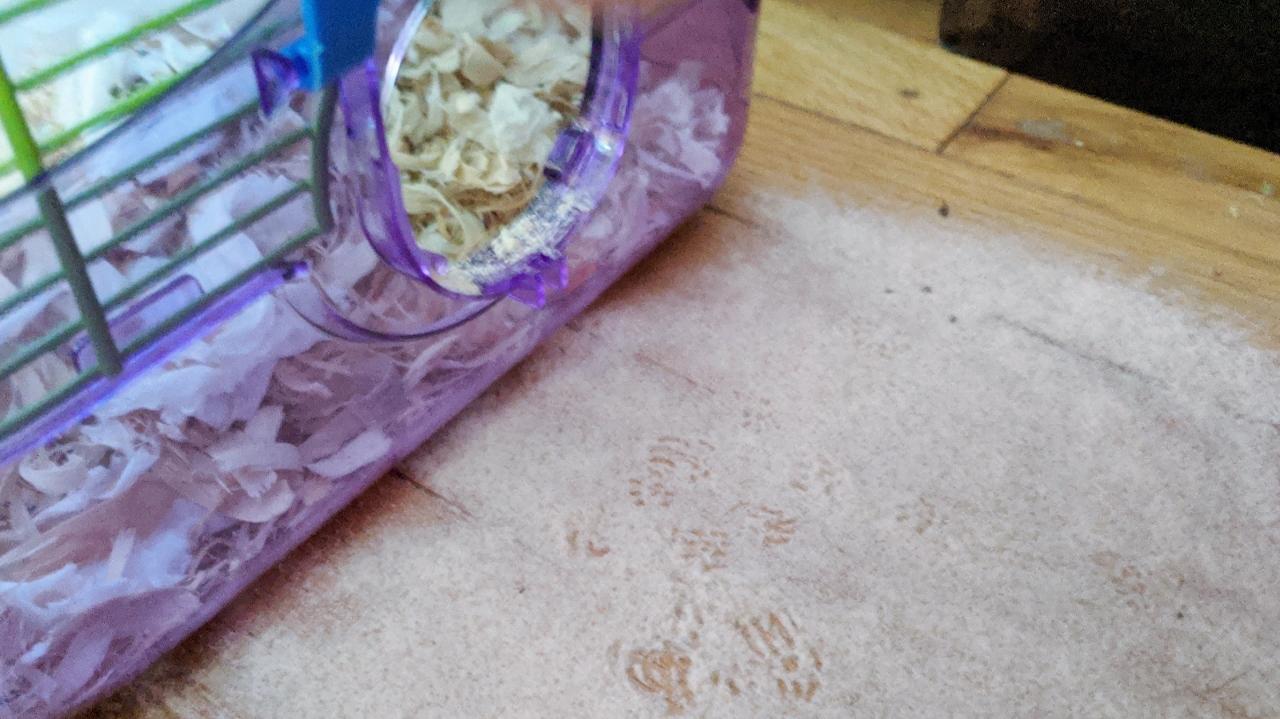 A Mouse Story – Part 2
