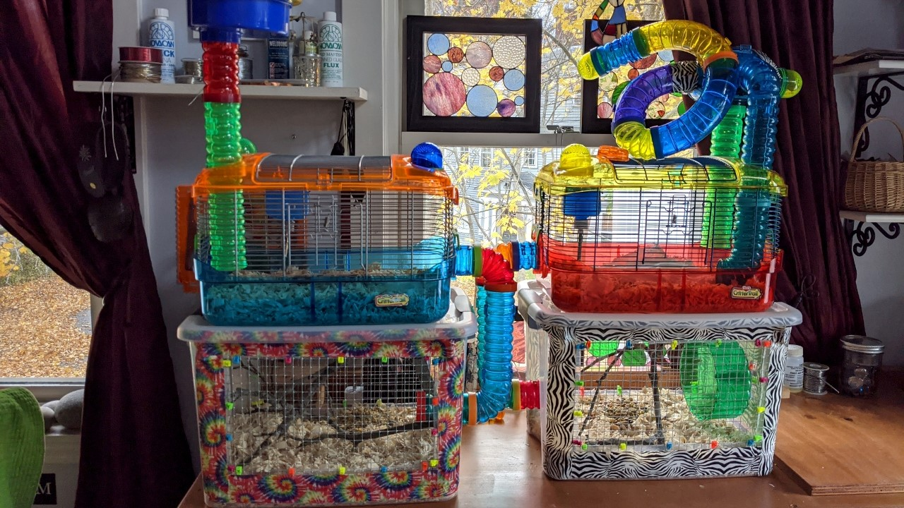 Bin Cages for the Mice