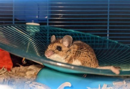 A Mouse Story – Part 4