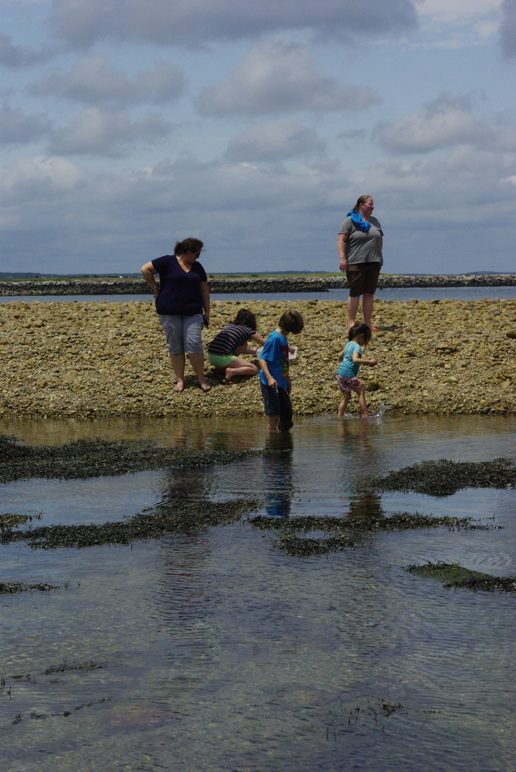 Cape Cod Learning Tours