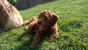 Pippa in Grass