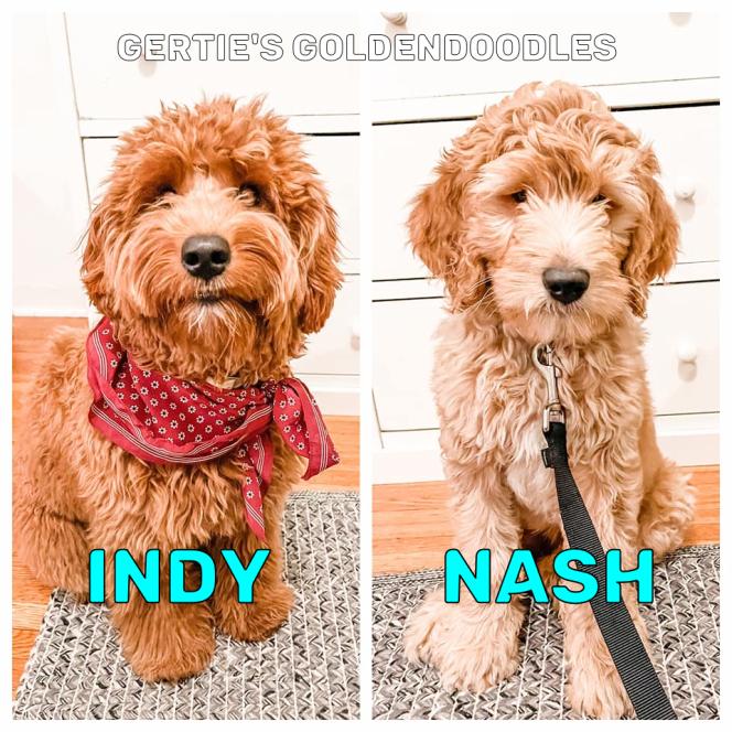Indy & Nash