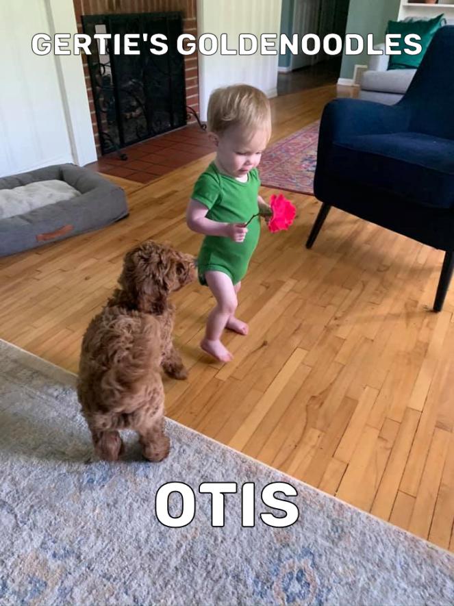 Otis 2