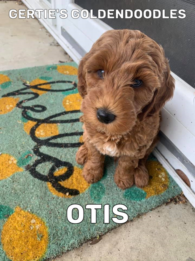 Otis 3