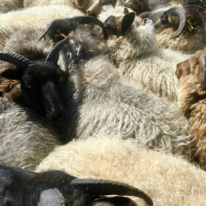 DIY Sheep Crafts | Sheep Lifestyle | Shepherd Like A Girl