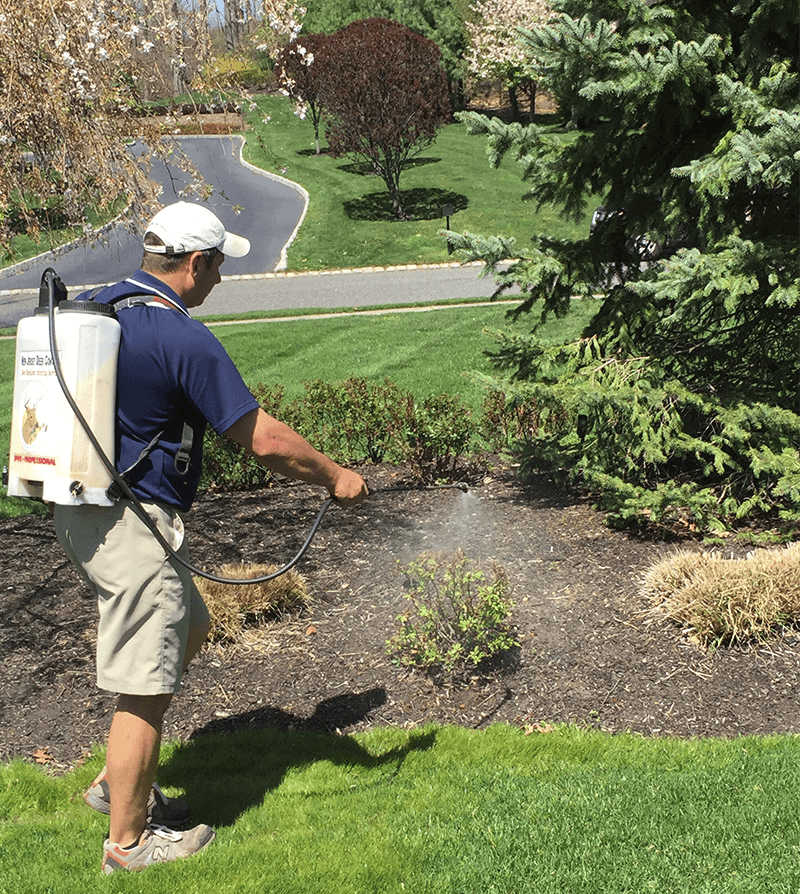 Deer Repellent Spray Services