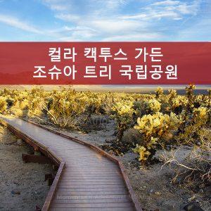 컬라 캑투스 가든-조슈아 트리 국립공원