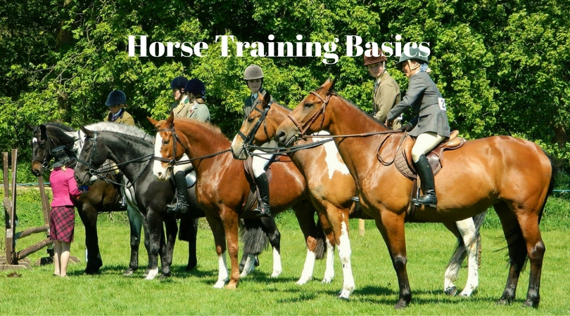 Horse Training Basics – 5 Tips that Every Beginner Must Know