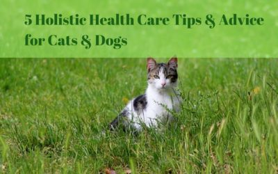 5 Holistic Health Care Tips & Advice for Cats & Dogs