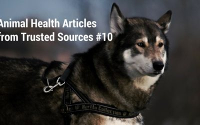 Animal Health Articles from Trusted Sources #10