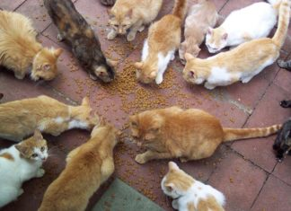 Feline Nutrition: What You Need to Know