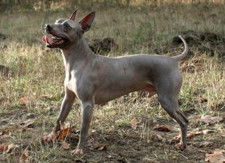 How to Keep Your Medium-Sized Mixed Breed Dog Healthy