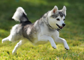 Using Nutrition To Help Dogs With Cardiac Problems