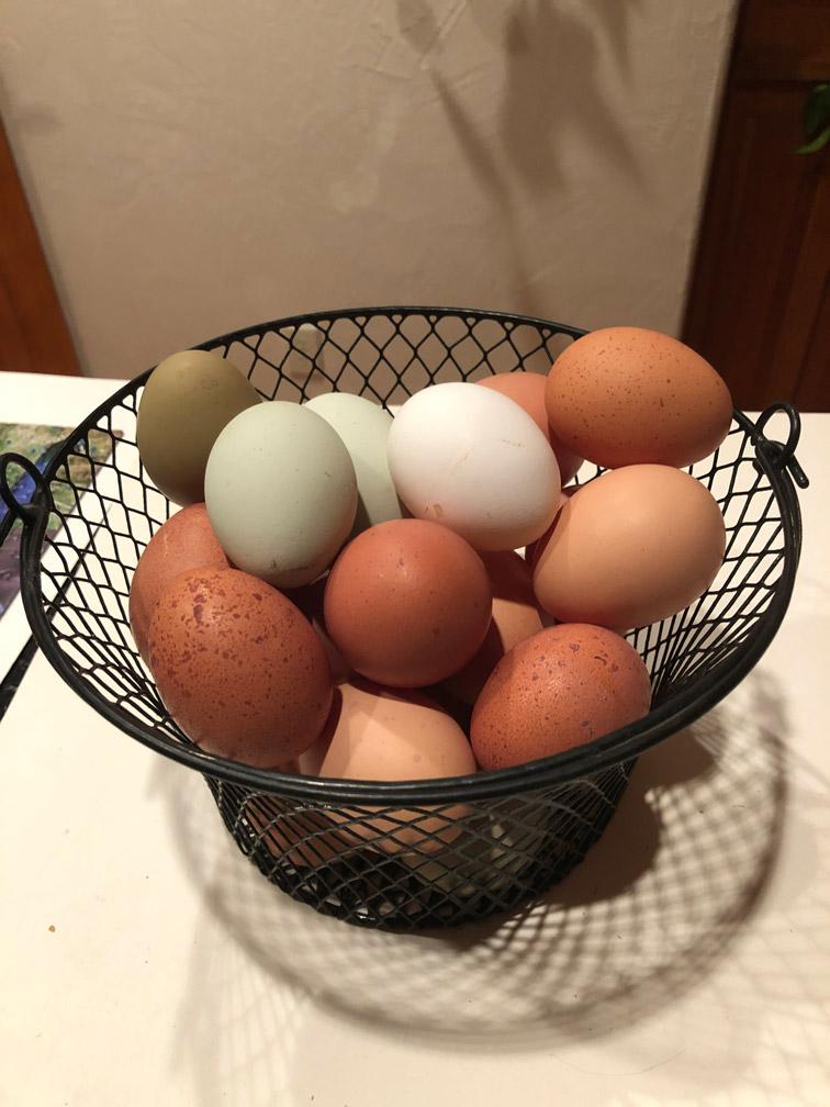 Fresh Eggs at Almosta Farm Cove Oregon