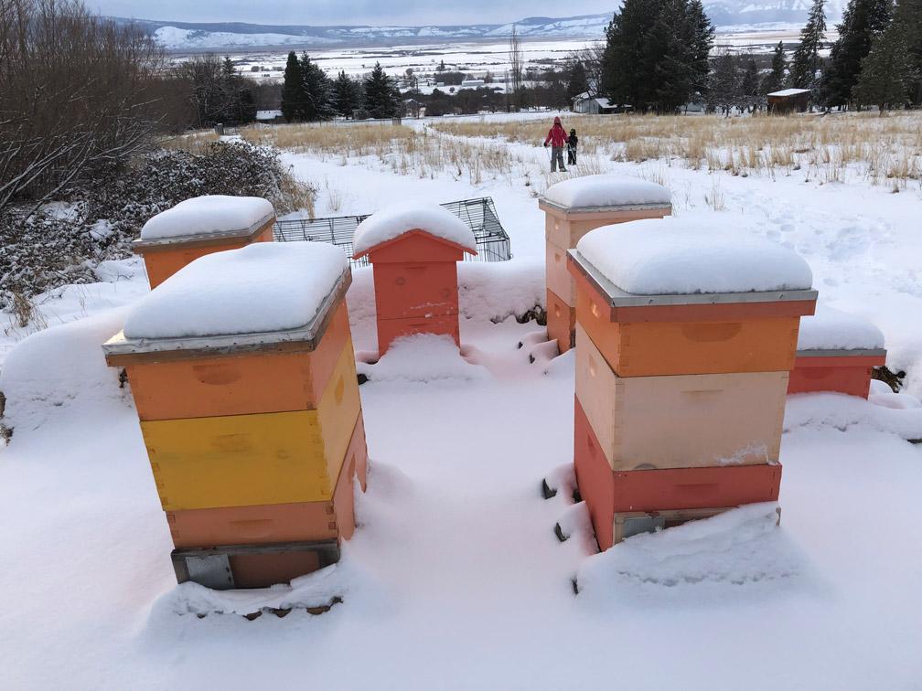 Beehives at Almosta Farm Cove Oregon